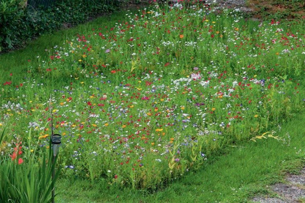 Blumenwiese im eigenen Garten. Freizeittipps NRW.