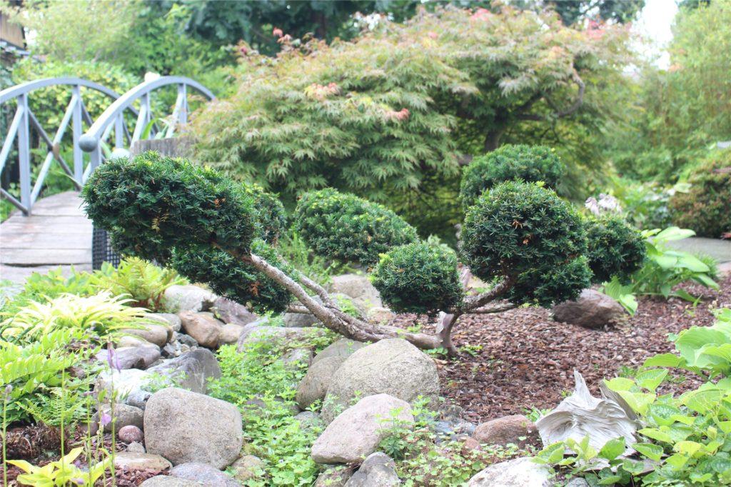 Nicht nur viele Pflanzen sind japanisch, sondern auch ihr Schnitt.