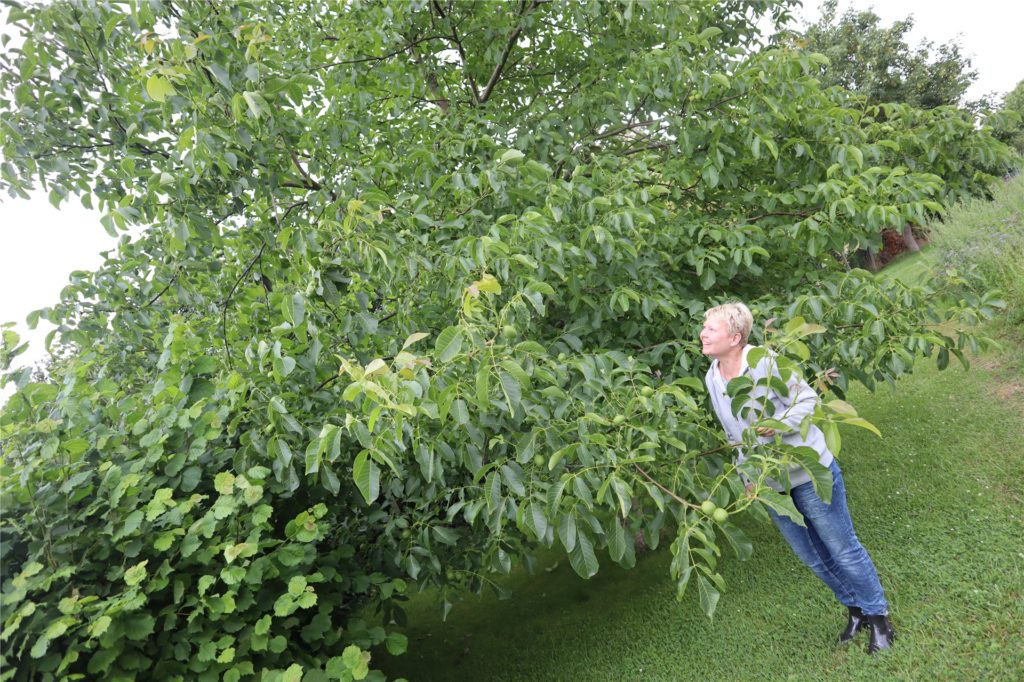 Susanne Böttger liebt den Walnussbaum, mit dessen Früchten sie Brot backt.