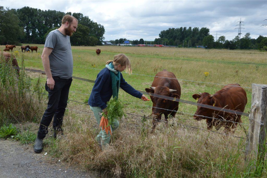 Bio-Landwirt Jan Dickhöfer und seine Tochter Frieda begutachten die Herde, die jetzt in Castrop-Rauxel steht. Sie soll bestes Bio-Rindfleisch liefern.