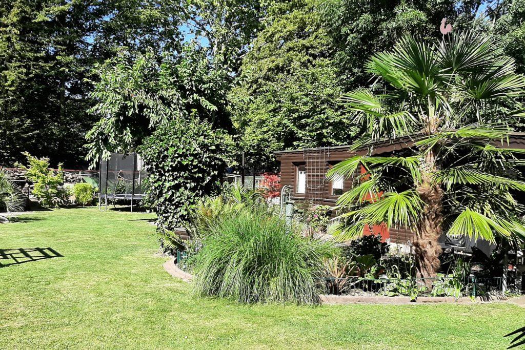 Die rechte Seite des Gartens soll eher tropisch-asiatischer Natur sein.