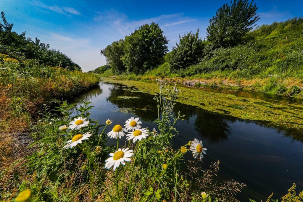 Naturidyll Emscher: Aus der Abwasserkloake ist an vielen Stellen in Dortmund ein Naturparadies geworden.