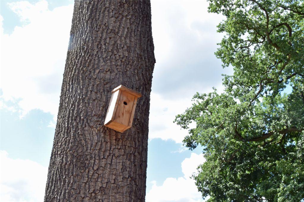 Dieser Nistkasten wurde nicht von Straßen NRW aufgehangen, erfüllt aber trotzdem den Zweck, dass sich Vögel einisten, die den Eichenprozessionsspinner fressen.