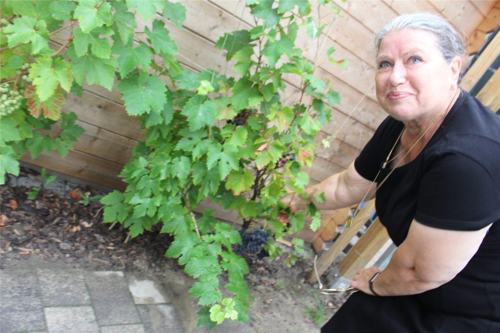 Die Weinstöcke sind noch ganz jung. Eines Tages aber sollen sie eine Gartenlaube umranken.