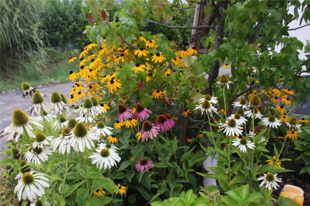 Bei ihrer Blumenauswahl hat Jordanka Hahner auch auf Farbenvielfalt geachtet.