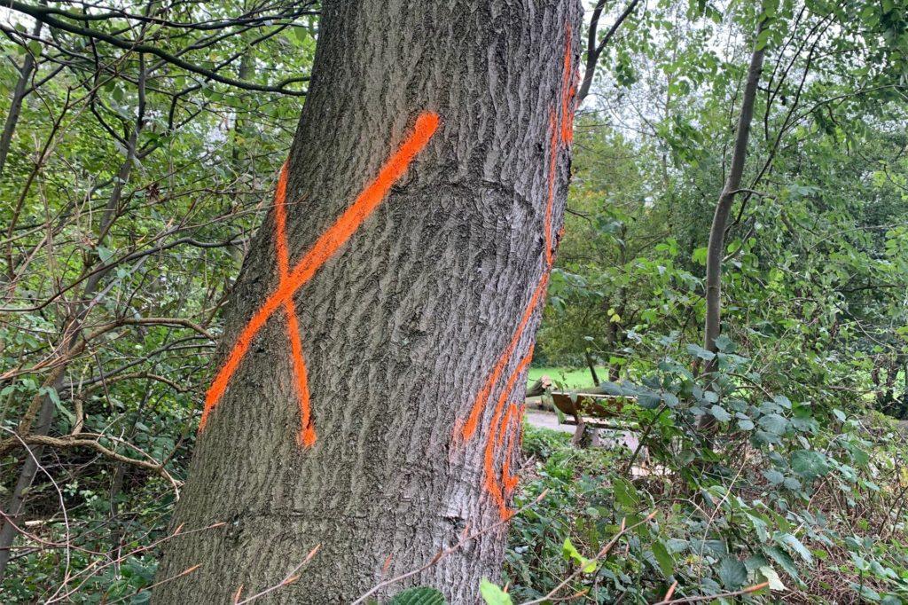 Bäume, die gefällt werden, sind gekennzeichnet. Wie bei diesem Baum, ist die Verkehrssicherheit gefährdet, aufgrund einer Bank im Hintergrund.