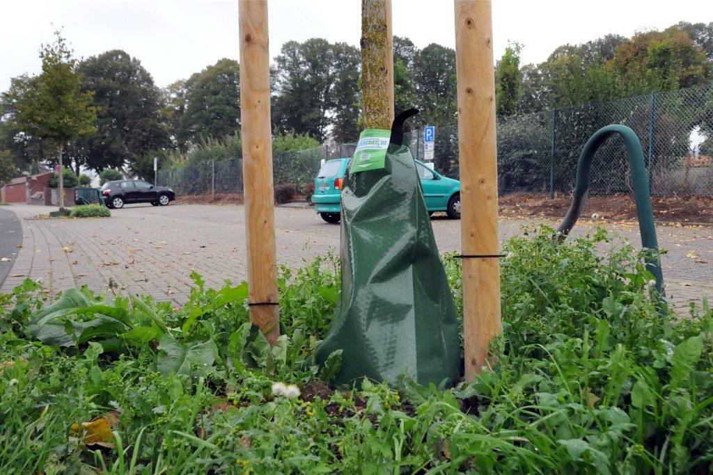 Auch an einem nachgepflanzten Haselbaum an der Friedhofstraße ist ein Bewässerungsbeutel aufgehängt.
