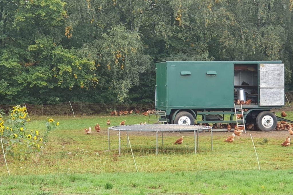 Die Familie hat den ausrangierten Anhänger selbst zu einem Hühnermobil umgebaut.