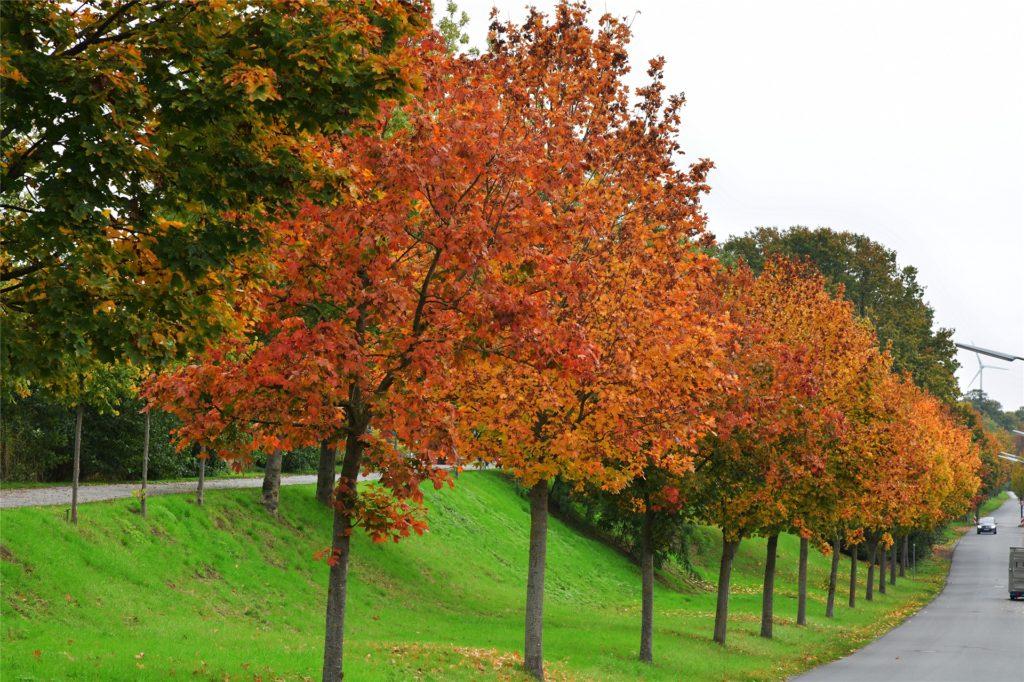 So tolle Farben hat der Herbst in Olfen zu bieten.