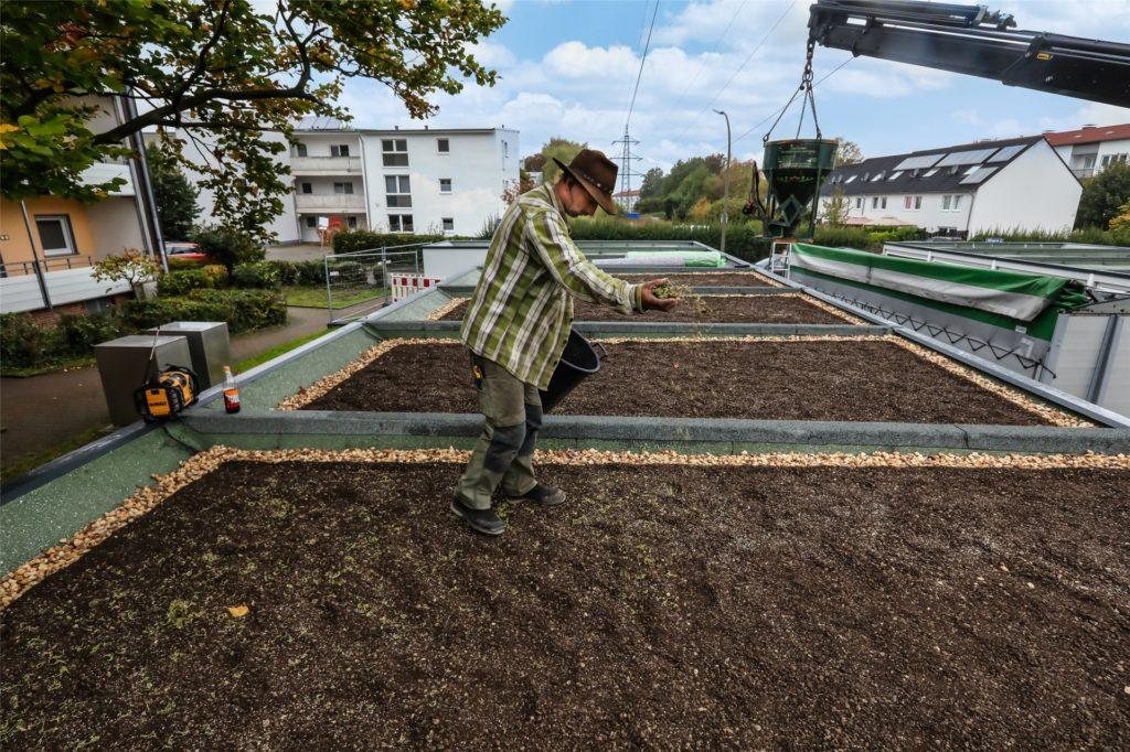 Die Garagendächer werden begrünt. Ein Fachbetrieb bringt Saatgut aus.