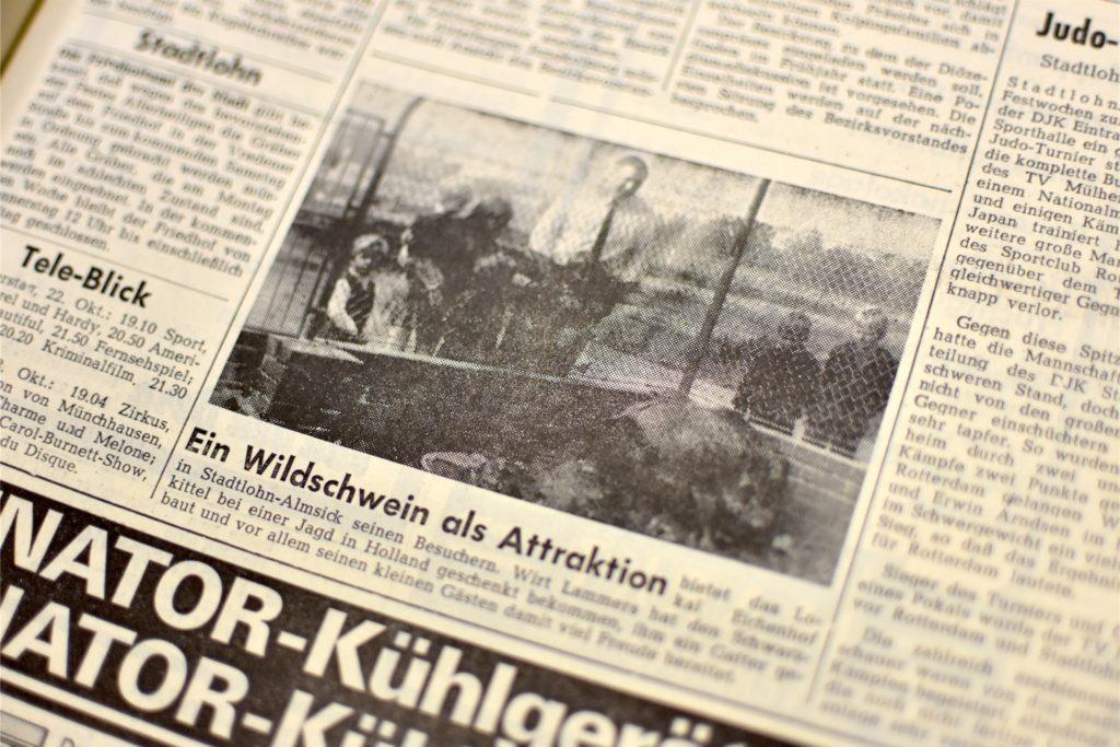 Ein Wildschwein im Gehege am Eichenhof: 1970 offenbar noch eine kleine Sensation.