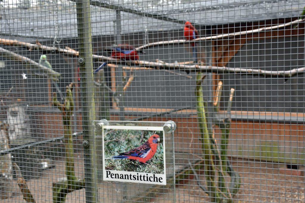 Penantsittiche können auch bewundert werden in den Volieren im Losbergpark. Aber auch Schneeeulen oder der Lachende Hans.