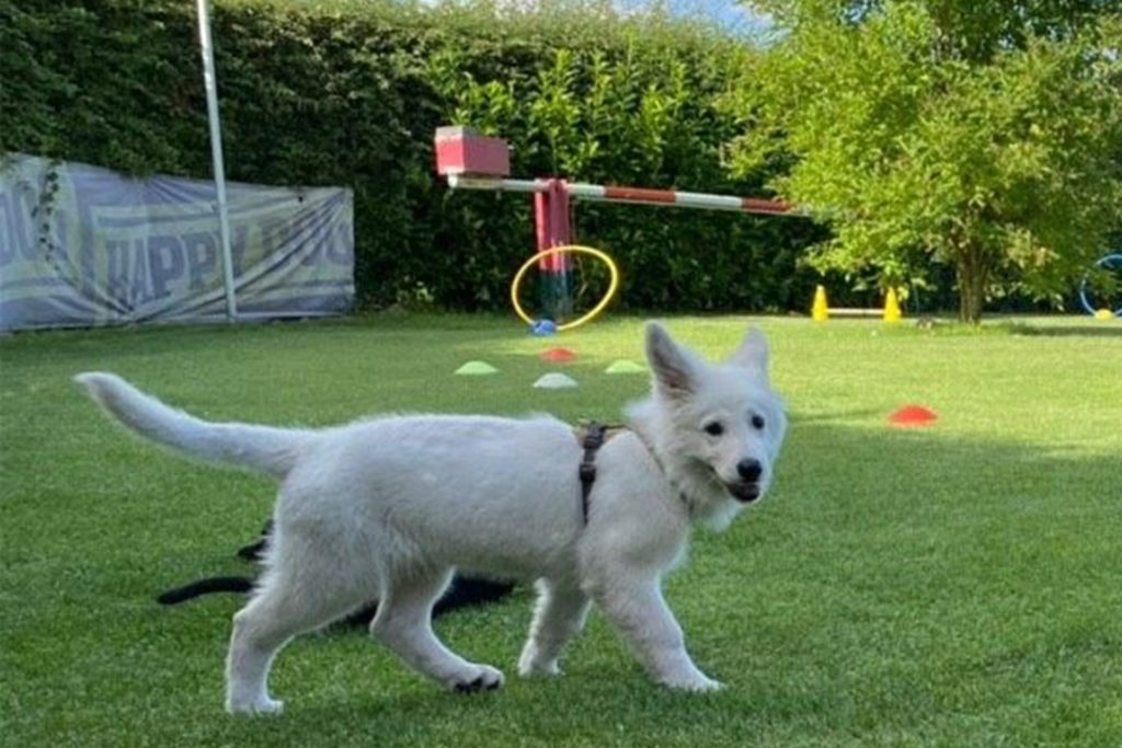Schäferhundmädchen Aria ist noch in der Ausbildung und soll an der Kardinal-von-Galen-Schule eingesetzt werden.