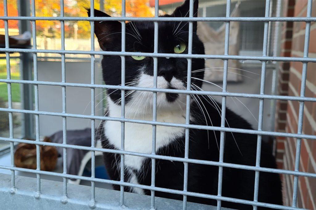 Durchschnittlich 80 Katzen warten gleichzeitig auf eine Vermittlung. Auch in Zeiten von Corona.