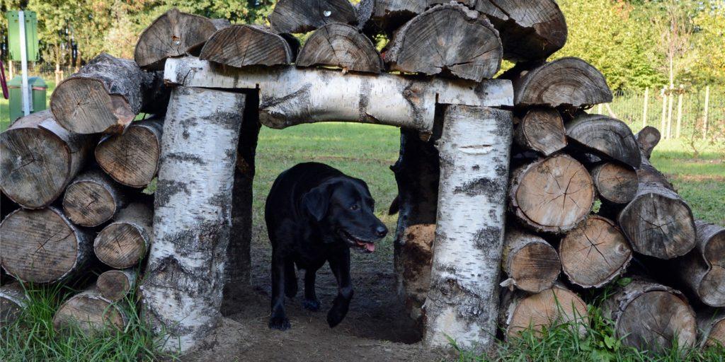 Tunnel und Brücke zugleich ist dieses Holzbauwerk auf dem Gelände der Hundewiese. Wegen der Pandemie ist Doghausen ab 2. November vorübergehend geschlossen.