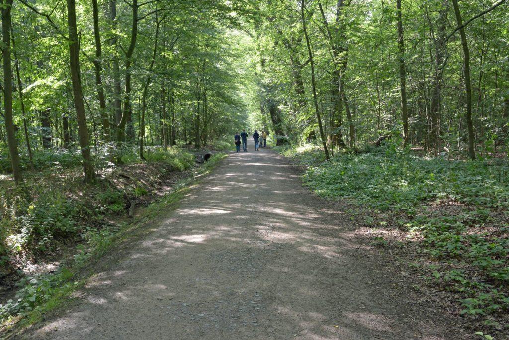 Durch den Werner Stadtwald führt der Wanderweg W3.