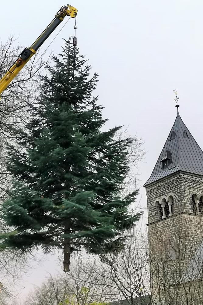 Der große Tannenbaum aus dem Pfarrgarten am Pfarrhaus der Katholischen St.- Urbanus-Kirche ging auf seine letzte Reise. Er steht jetzt als Weihnachtsbaum auf dem Marktplatz.