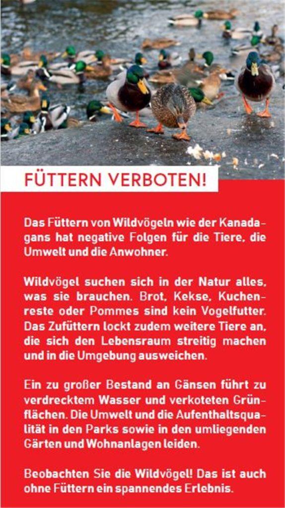 Füttern verboten: Mit einem Flyer will die Stadt aufklären, dass Kanadagänse nicht gefüttert werden sollten.