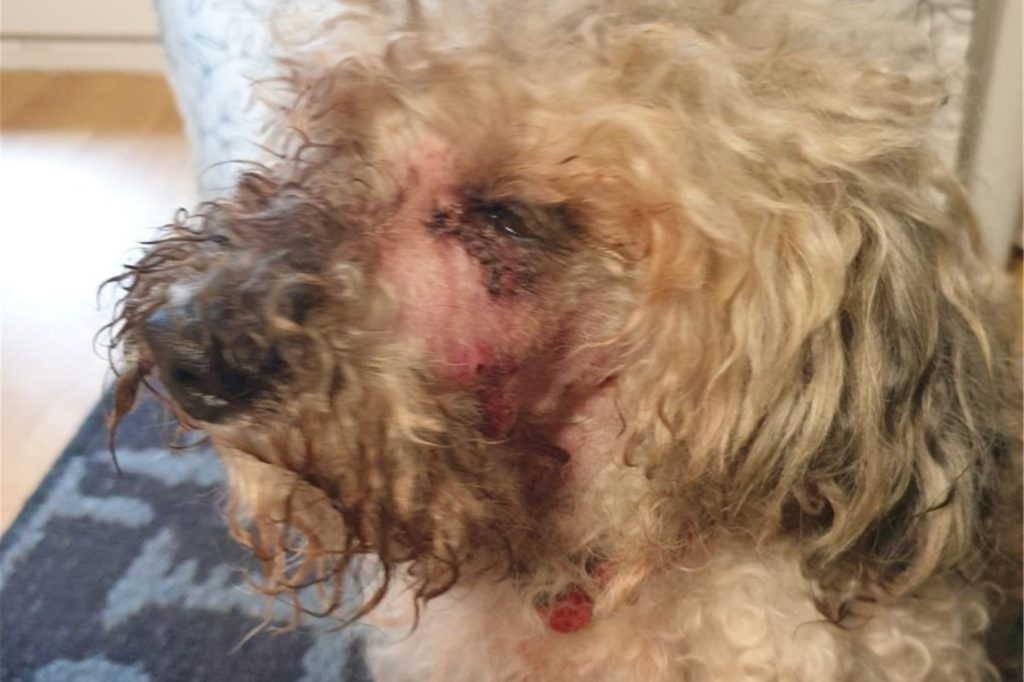 Verletzt wurde Pepe bei der Attacke auf dem Segelplatz.
