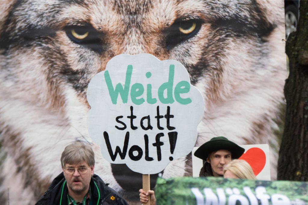 Einige Landwirte sehen ihre Tierbestände von den Wölfen bedroht.