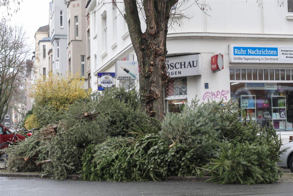 Im gesamten Stadtgebiet waren am Samstag (9.1.) ausgediente Weihnachtsbäume, die bereit zur Abholung lagen, zu sehen - hier im Kreuzviertel.