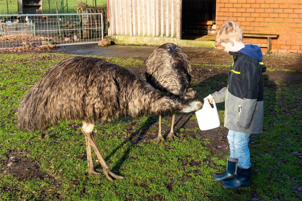 Auch die Emus gingen auf Tuchfühlung mit den Besuchern.