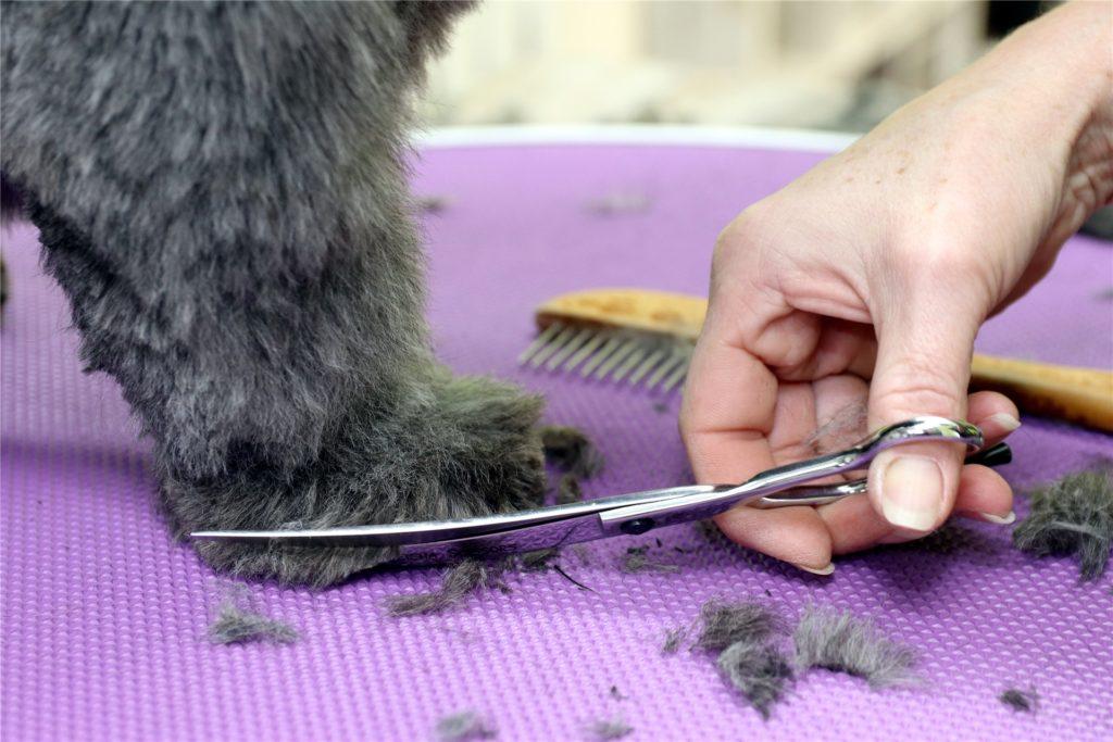 An den Pfoten werden die Haare der Hunde ebenfalls gestutzt. Und bei Bedarf schneidet Heike Stratmann auch die Nägel.