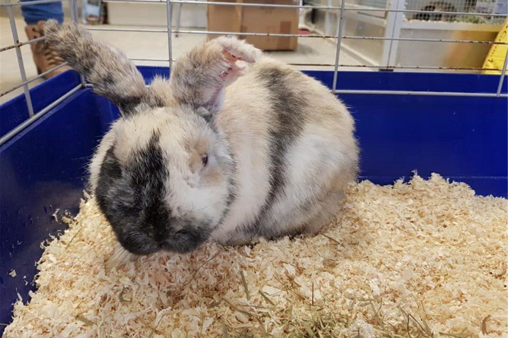 In Julias Tierheim wird das Kaninchen aktuell