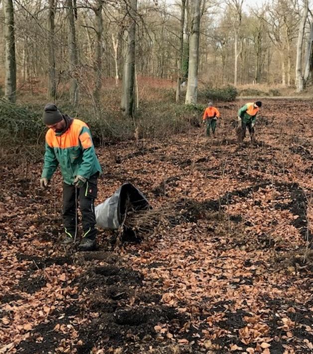 Waldarbeiter pflanzen junge Bäume in einem von Ela 2014 stark beschädigten Waldstück in Bladenhorst.