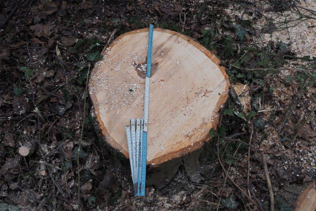 Auch viele teils große Bäume seien gefällt worden, ärgert sich ein Anwohner.