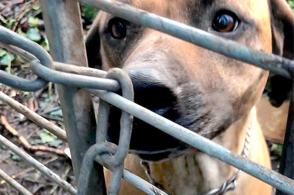 Mit seinem Engagement als Tierfreund trug Udo Blumenthal mit dazu bei, dass die Rhodesian-Ridgeback-Hündin Luna und ihre beiden Hundekinder aus dem verwahrlosten Garten gerettet werden konnten.