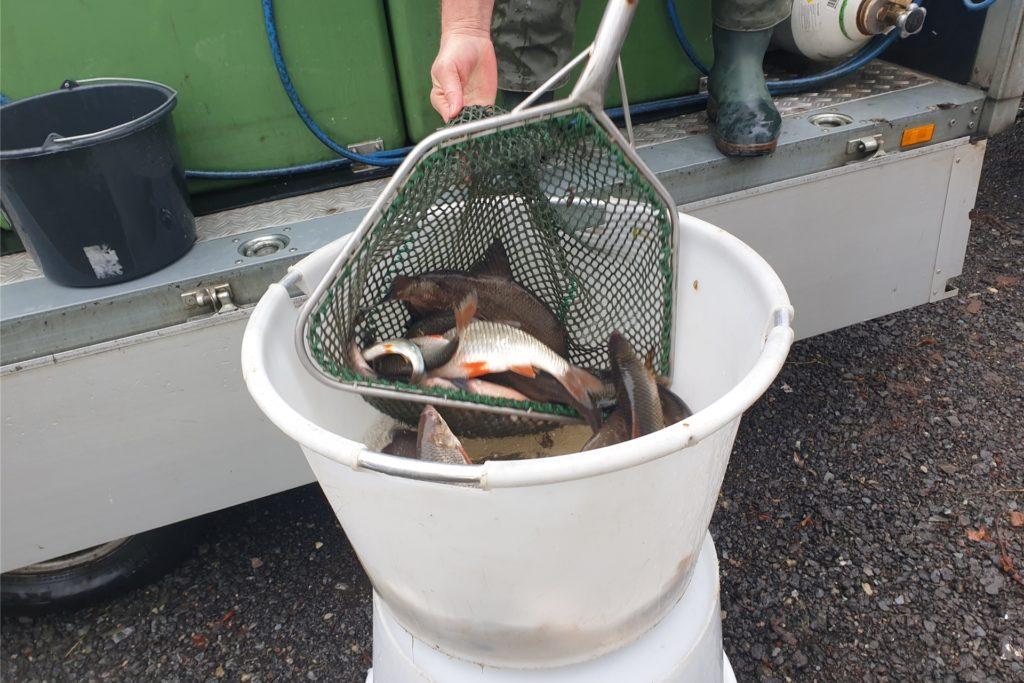 Rund 2400 Euro legte der Angelverein für den neuen Fischbesatz auf den Tisch. Weitere Besatzmaßnahmen sollen noch flogen.