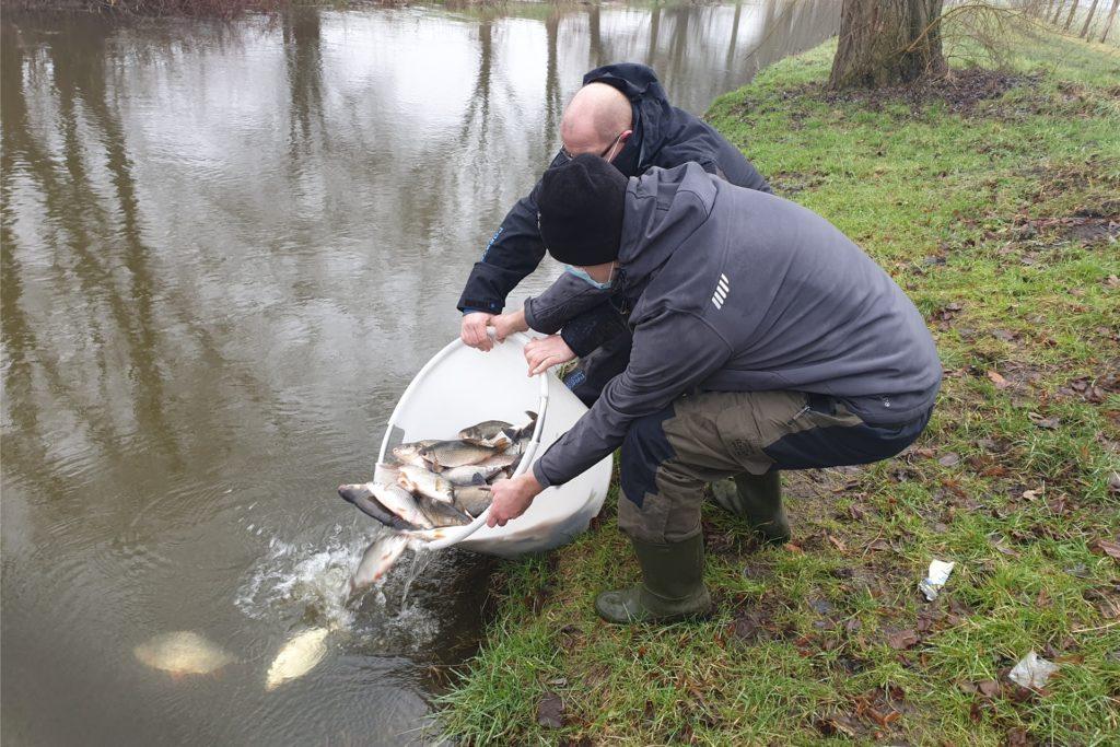 Weißfischmischbesatz in der Größe von 15 bis 35 cm sowie Schleien haben die Mitglieder des ASV Nienborg in die Dinkel gesetzt.