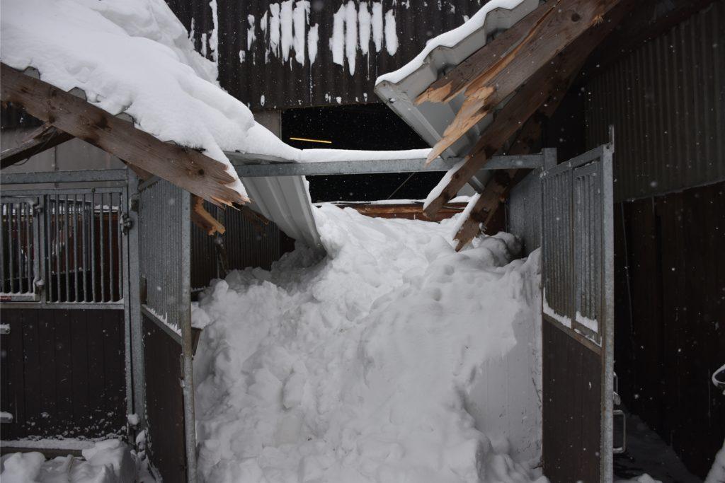 Die Schneemassen vom Dach stürzten in die Boxen darunter. Die Pferde wurden zum Teil zwischen Trümmern, Stalltüren und Schnee eingekeilt.