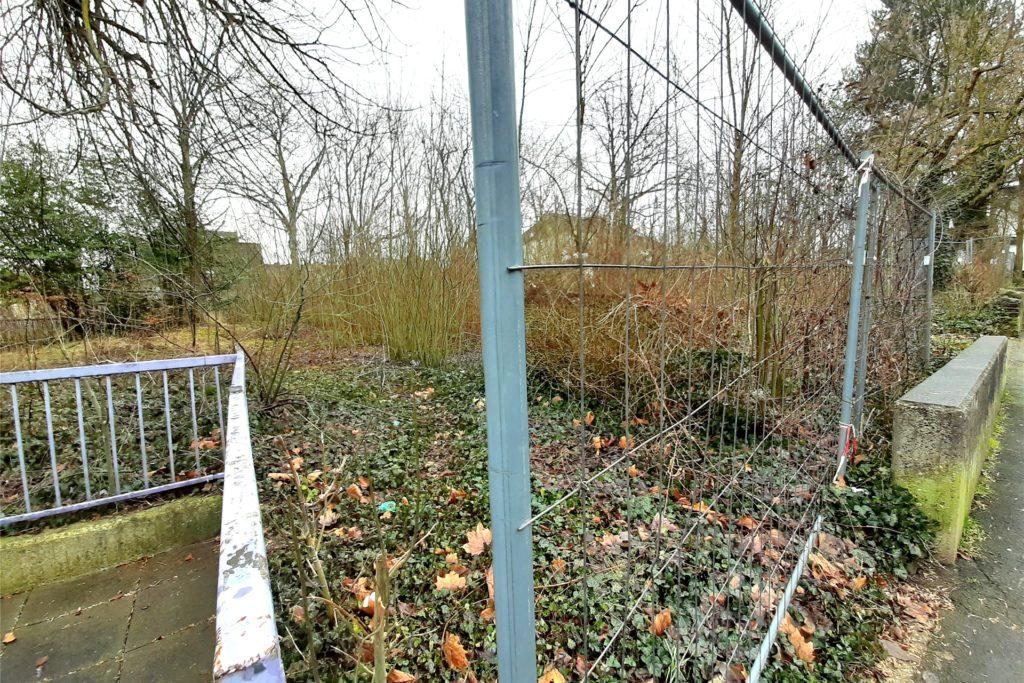 Die Rodungsarbeiten auf dem Grundstück sollen noch in diesem Monat beginnen. So der Plan. Die Witterung könnte dem allerdings noch einen Strich durch die Rechnung machen. Ein Teil der großen Bäume wird in das Bauprojekt integriert.