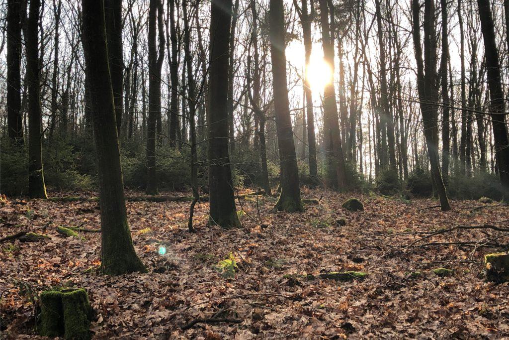 Der Wald kann uns mit seiner Schönheit zu jeder Jahreszeit verzaubern.