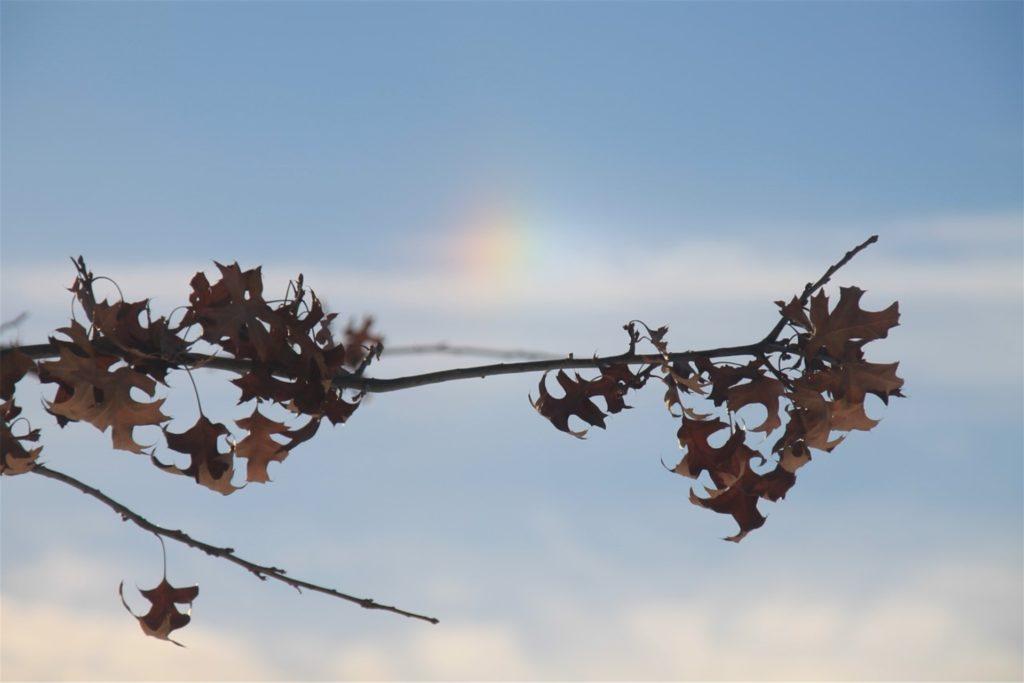Dieses Bild mit dem leichten Regenbogen-Schleier ist in Brackel entstanden.