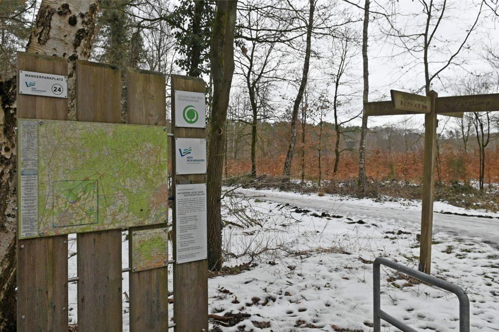 Spaziergänger wollen einen Wolf in der Hohe Mark zwischen Barkenberg und Lembeck gesichtet haben - ausgeschlossen ist das nicht.