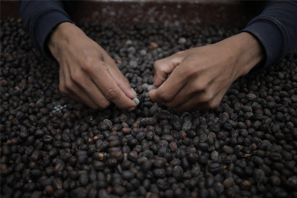Geisha: Der teuerste Kaffee Panamas.