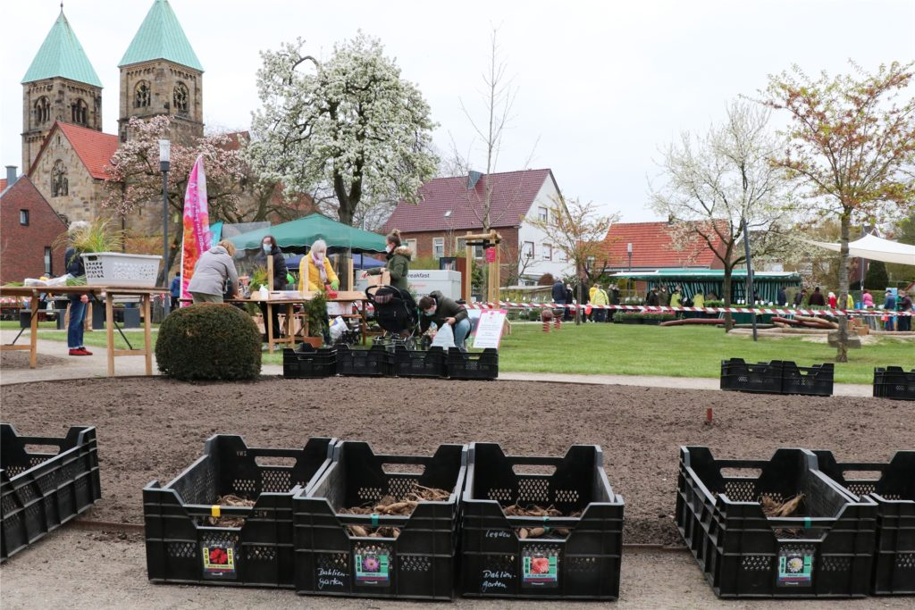 Die Dahlienknollen stehen im Mittelpunkt beim Pflanzenmarkt im Dahliengarten. Die Vereine Dahliengarten und Blumenkorso Legden verkaufen hier mehr als 70 verschiedene Sorten.