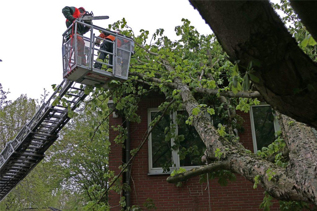 Im Hopmanns Mühlenweg stürzte eine Kastanie auf das Gebäude einer Kindertagesstätte. Vom Korb eines Teleskopmastes entfernten Kräfte der Feuerwehr den Baum vom Dach.