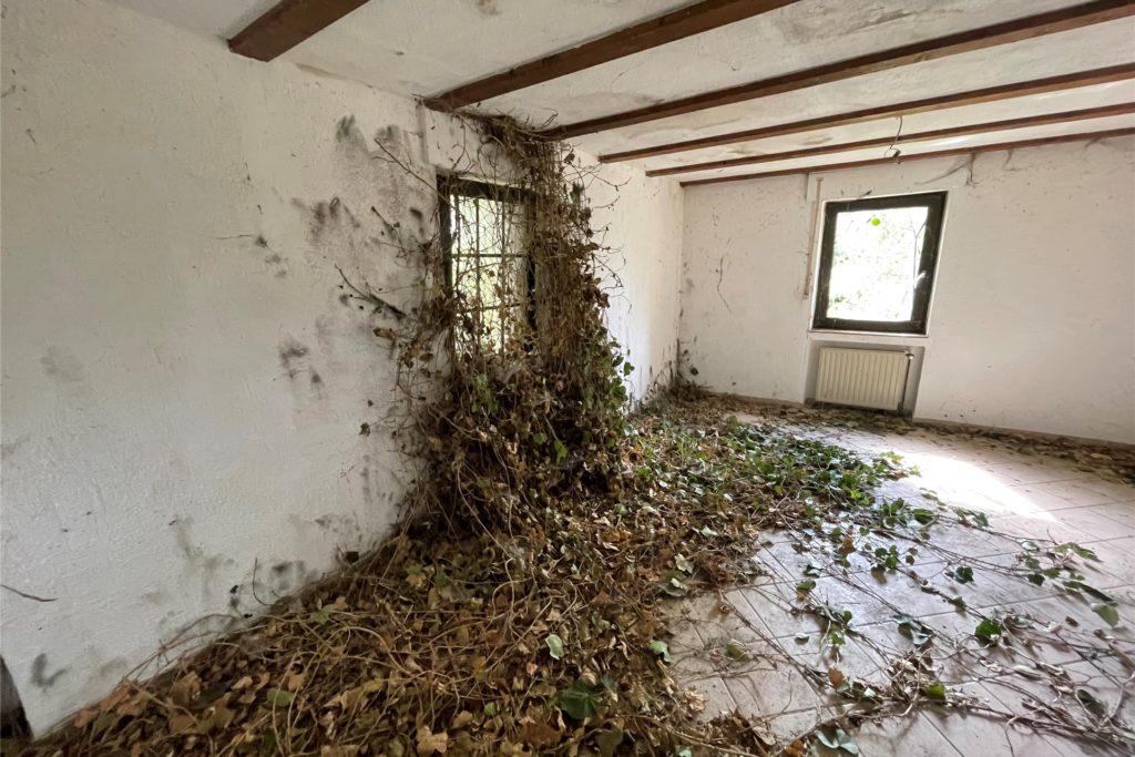 Die Natur hat die Oberhand gewonnen, Efeu rankt im Oberschoss an den Innenwänden herunter und bedeckt zudem Teile des Fußbodens.