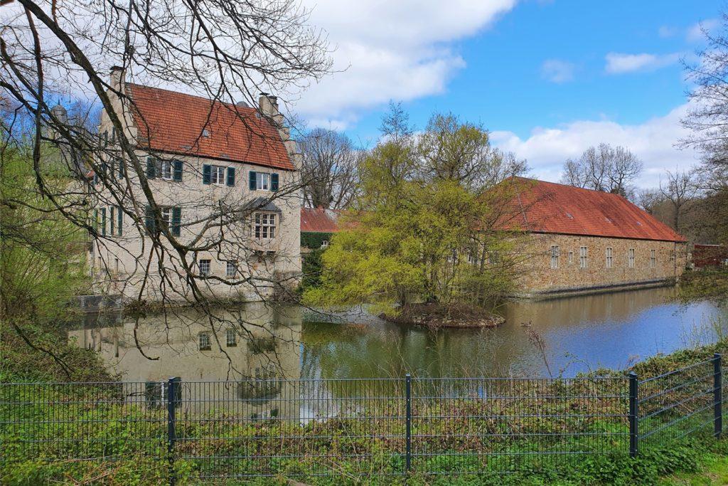 Im Teich am Haus Dellwig fanden Spaziergänger Fische, die mit dem Bauch nach oben schwammen.