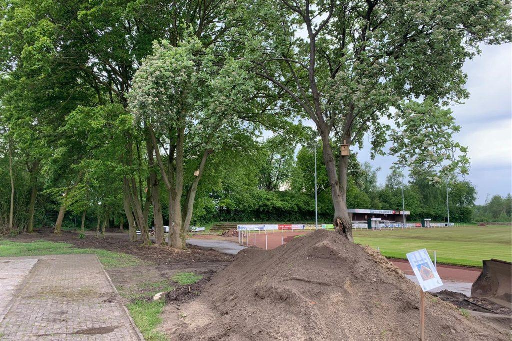 Hier, zwischen den Bäumen, soll der Spielplatz entstehen. Mit einem Kletterparcours, einem Balancierseil, Wippe und Schaukel.