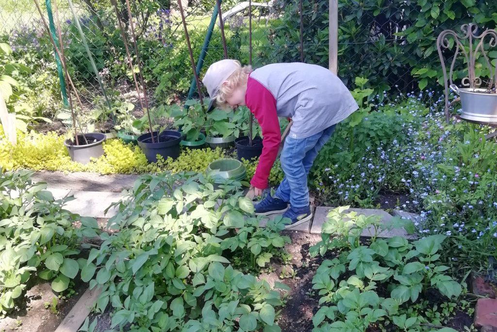Auch der sechsjährige Mika wird den Besuchern in diesem Jahr den Garten zeigen