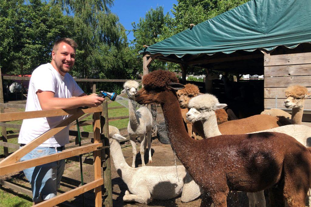 Christian Tiburzy sorgt für Abkühlung bei den Alpakas.