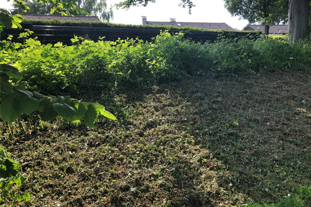 Dieser Erdhügel, der den Park von der Wohnbebauung an der Lautastraße abgrenzt, sollte als natürliche Barriere mit dornenreichen Büschen bepflanzt werden