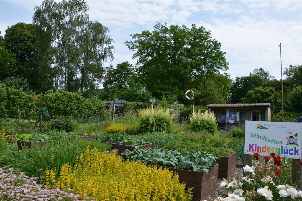 Schüler zweier umliegender Grundschulen lernen die Aufzucht von Pflanzen an den Hochbeeten im Schulgarten des Gartenvereins Am Externberg.