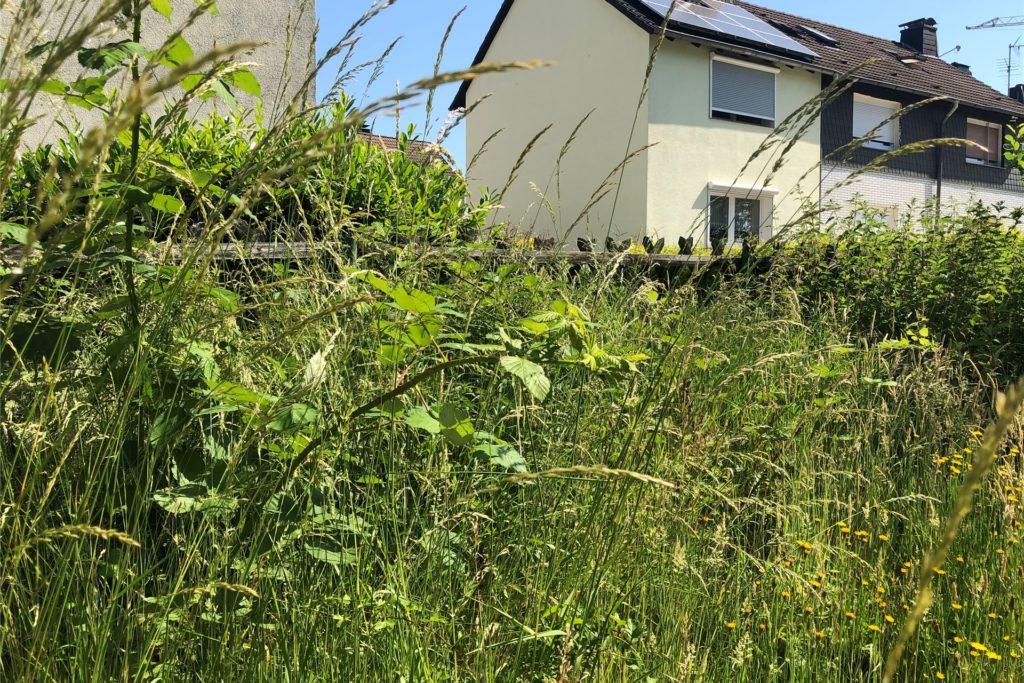 Der Zaun der Nachbargrundstücke ist kaum noch zu sehen. Bevor Karin Stracke stundenlang Unkraut gerupft hat, sah es auch an ihrem Zaun so aus.