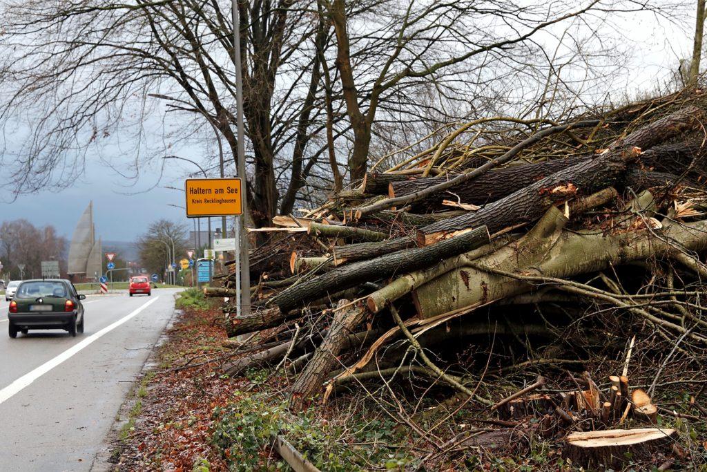 Wenn Straßen NRW einen Rückschnitt vornimmt, fällt dieser ebenfalls häufig radikal aus.